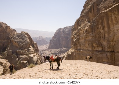 Donkeys with view of wadis near Petra Jordan