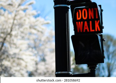 """""""Don't Walk"""" Red Traffic Alert Attached To Black Traffic Pole In Washington D.C. City Against White Cherry Blossom Flowers"""