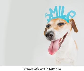 don't worry be happy smiling dog portrait. Motivation emotional pet