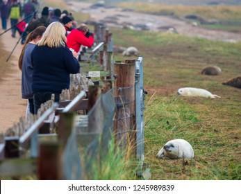 DOONA NOOK, UK - November 23, 2018: The Fence Line, Donna Nook Grey Seal Colony,  Lincolnshire.