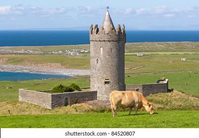 Doonagore castle with Irish cow in Doolin - Ireland