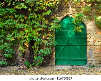 Door and bright green ivy in garden. Natural composition