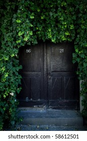 door covered with ivy