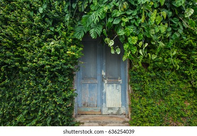 The door on the old wall in between the bushes