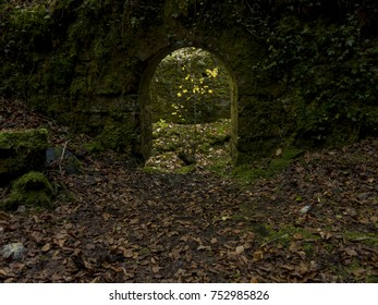 A door in a wall full of moss with an illuminated tree behind. Leaves on floor.