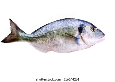 Dorada fish on white background