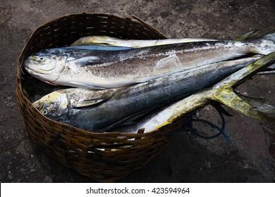 Dorado dolphin fish also known as mahi-mahi or Coryphaena Hippurusl / Indonesia, Bali
