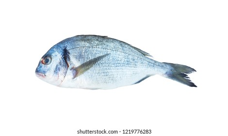 Dorado fish isolated on the white background. Close-up view of raw fresh healthy dorado fish isolated on white. Dorado fish over white background. Fish with copy space for text.