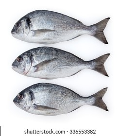 Dorado fish isolated on white background with clipping path