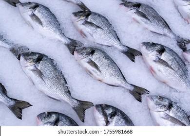 Dorado fish on ice at supermarket for sale.
