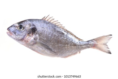 Dorado fish on a white background