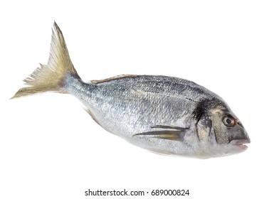 Dorado fish or sea seabream isolated profile view on white background