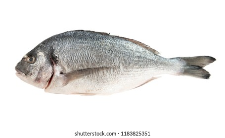 Dorado fresh whole fish isolated on white background
