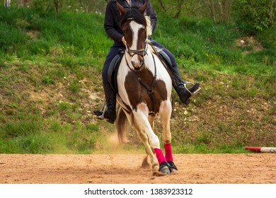 Dordogne, France 04/24/2019 A tobiano pian horse in full training of western mounts
