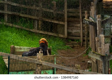 Dordogne, France 04/29/2019 Hunting dogs in their pens
