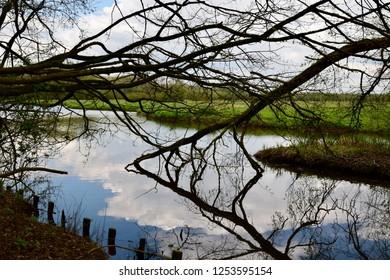 Dordrecht Biesbosch Water Nature
