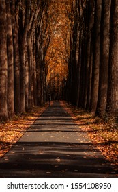 Dordrecht, Netherlands - October 26, 2019:  Couple in autumn park. Adults walking towards on road in autumn forest. Beautiful fall nature in Biesbosch in Dordrecht.
