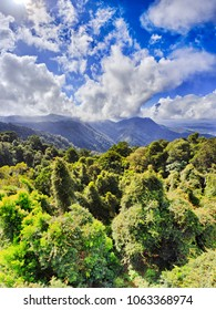Dorrigo national park with ancient gondwana rainforest from main tourist lookout on a sunny day over canopy of evergreen gum-trees under blue sky.