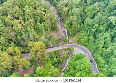 DOrrigo national park unique ancient Gondwana rainforest cut by Waterfalls road near Newell waterfall with lush evergreen gumtrees.