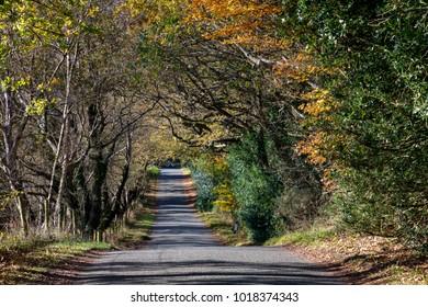 Dorset England November 17, 2017 Autumn colours in a Dorset, country lane,