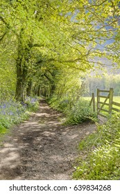 Dorset path in dappled sunlight - portrait