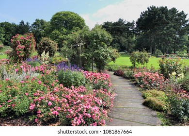 Dortmund, Germany. Rose flower garden in Westfalenpark.