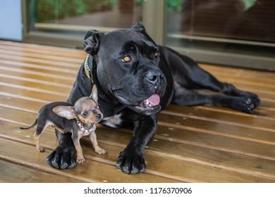 Dos perros, uno pequeño y otro grande mirando al mismo lugar