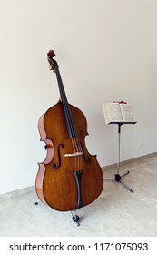 Double bass portrait in a white room