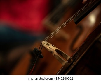 Double basses and cellos - side view - Background - Wallpaper - Hands on the strings