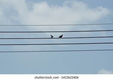 double birds on the electricity wire with blue sky background