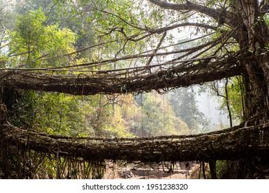 Double decker living root bridge. Meghalaya, India