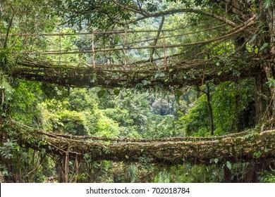 Double Decker Root Bridge, Nongriat, Meghalaya