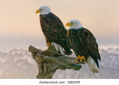 double eagles perched with alaska mountain range in background at sunset