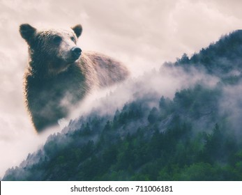 Double exposure abstract picture of nature wild watch. Bear and woods with the fog. Extreme  wilderness