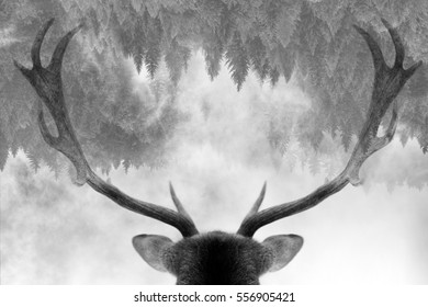 Double exposure of antler and forest