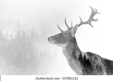 Double exposure of an antler and it's habitat