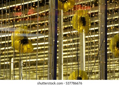 double exposure of decorated striped light with yellow flower