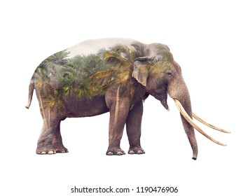 Double exposure of elephant and palm trees on white background