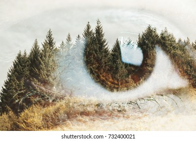 Double exposure of an eye with pine tree forest