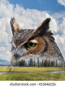 Double Exposure of Great Horned Owl and Grassy Mountain Meadow in Yellowstone National Park / Great Horned Owl and Mountain Meadow Double Exposure / Double Exposure of Great Horned Owl