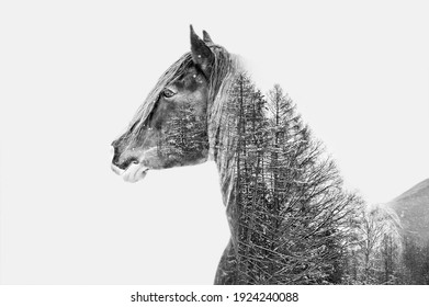 Double exposure horse in black and white. Connecting horse and nature trees.