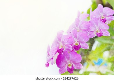 double exposure, Orchids with pink orchid flowers