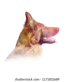 Double exposure poster with german shepherd dog and autumn leaves. Minimal style picture.