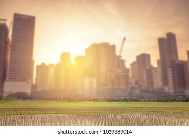 double exposure  of rice green field with blurred building in the city against the light from sunrise, Conceptual image show society changing and development