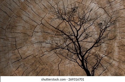 Double exposure of silhouette dead tree  and Cut tree trunk. nature background