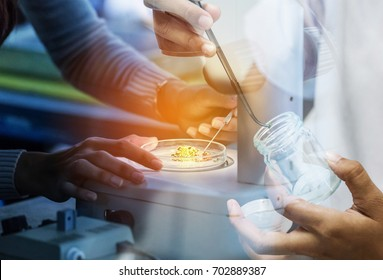 Double exposure student girl researsh in science laboratory experiments with student biotechnology girl using forceps for small pieces plant tissue culture in bottle at science laboratory