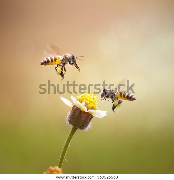 Double Honey Bee