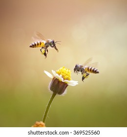 Double Honey Bee and A Flower - Macro Photography Series
