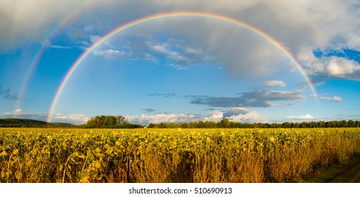 Double rainbow above sunflower field with shadow of photographer, Autumn, Russia