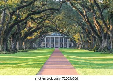Double row of live oaks trees, Oak Alley Plantation in Louisiana, USA.